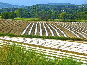 Polizza tutela agricola