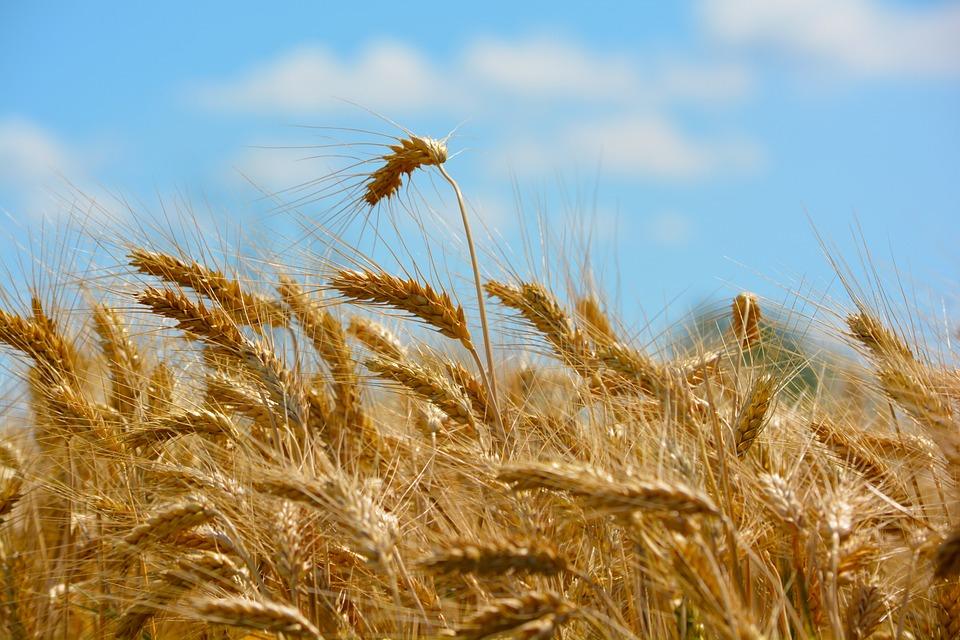 Valorizzazione ambiente agricolo